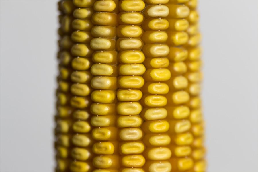 3.mais-grain-bobbey-epi.jpg