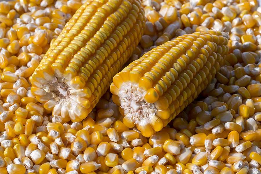 5.mais-grain-crosbey-grain.jpg