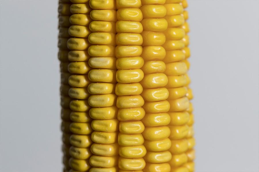 5.mais-grain-codey-grain.jpg