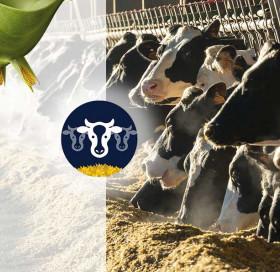 Approche variétés - ration ruminants