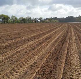 Réglette densité semis maïs