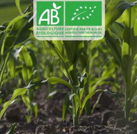 Gamme maïs AB