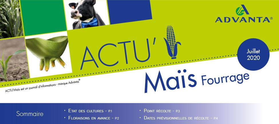 ACTU MAÏS RECOLTE
