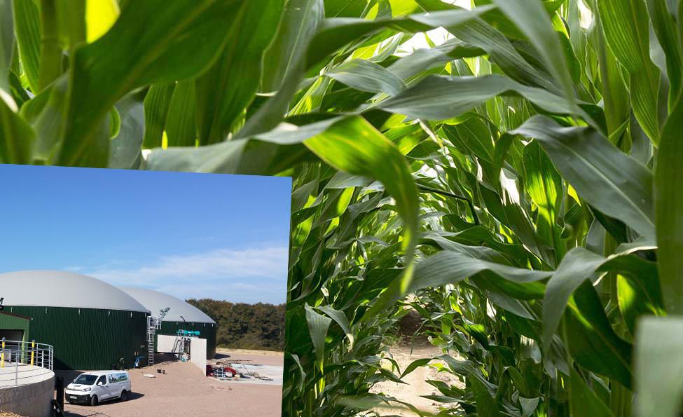 Méthanisation maïs