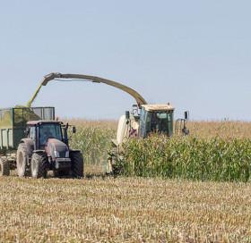 Stade de récolte maïs fourrage